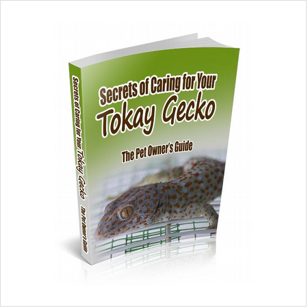 Pet Lizard Gecko Fun